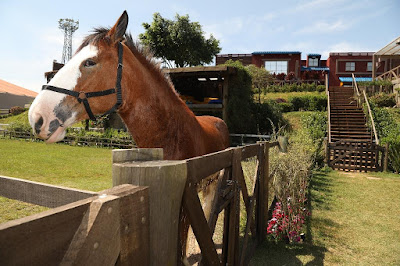 cavalo-na-sede-de-a-fazenda-11-em-itapecerica-da-serra