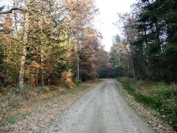 Баня Лисовицька. Ліс