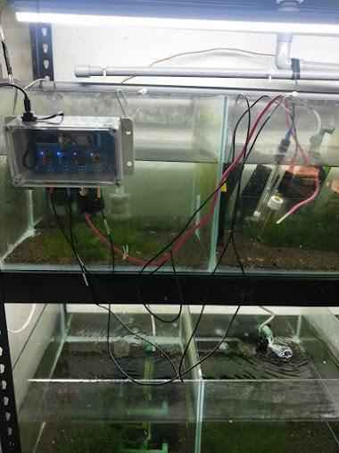 案例分享-水池組加氧化還原電極