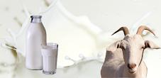 Manfaat Susu Kambing Etawa Untuk Stroke