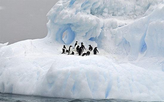 دراسة واعدة تبحث عن دواء لسرطان الجلد في القطب الجنوبي