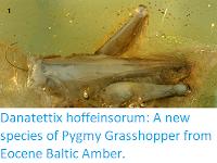 https://sciencythoughts.blogspot.com/2019/10/danatettix-hoffeinsorum-new-species-of.html
