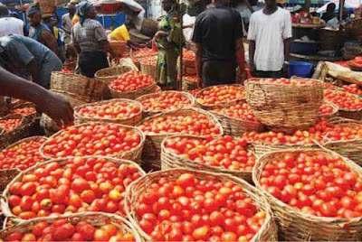 Kaduna declares state of emergency on tomato
