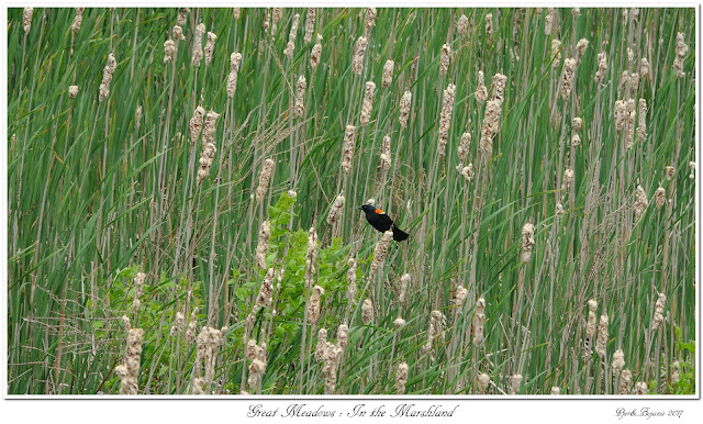 Great Meadows: In the Marshland