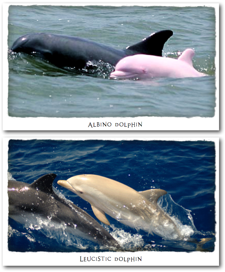 I Spy Animals: Dolphins of a Different Color