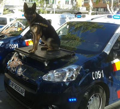 PERRO PASTOR ALEMÁN POLICÍA