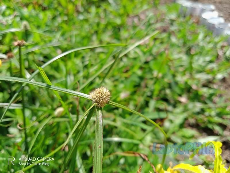 Hasil Foto Kamera Realme C15