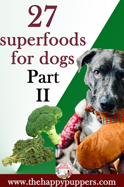 27 amazing superfoods for dogs