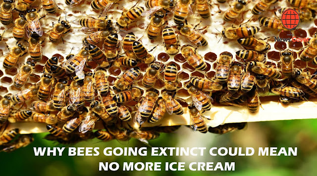 Why Bees Going Extinct Could Mean No More Ice Cream Or Avocados | News Cover