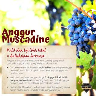 kelebihan dan kebaikan anggur muscadine