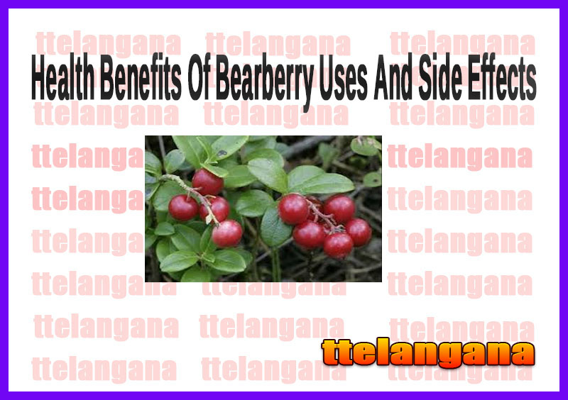 Health Benefits Of Bearberry Uses And Side Effects