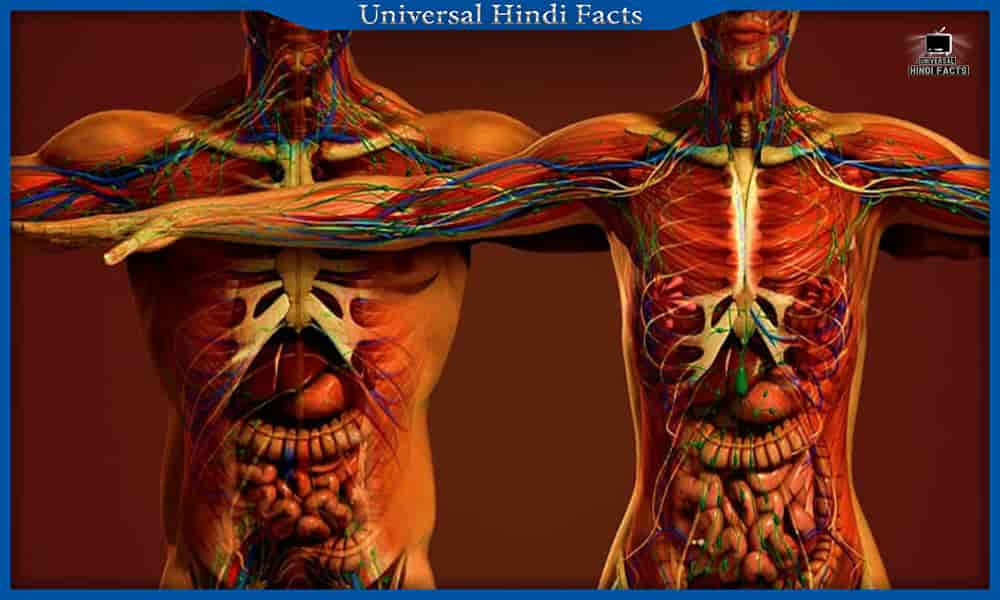 amazing facts about human body in hindi,facts about human body in hindi, Human body facts, amazing facts about human body in hindi, interesting facts about human body in hindi, amazing facts about human brain in hindi, amazing facts about human eye in hindi, amazing facts about human heart in hindi,