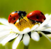 Cara Mencari Bugs Host Berkualitas 2015
