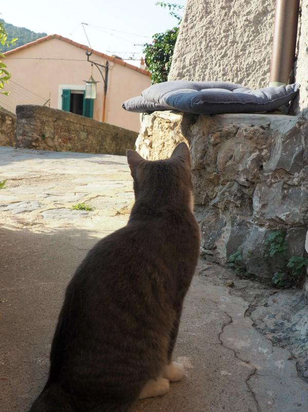 cat back