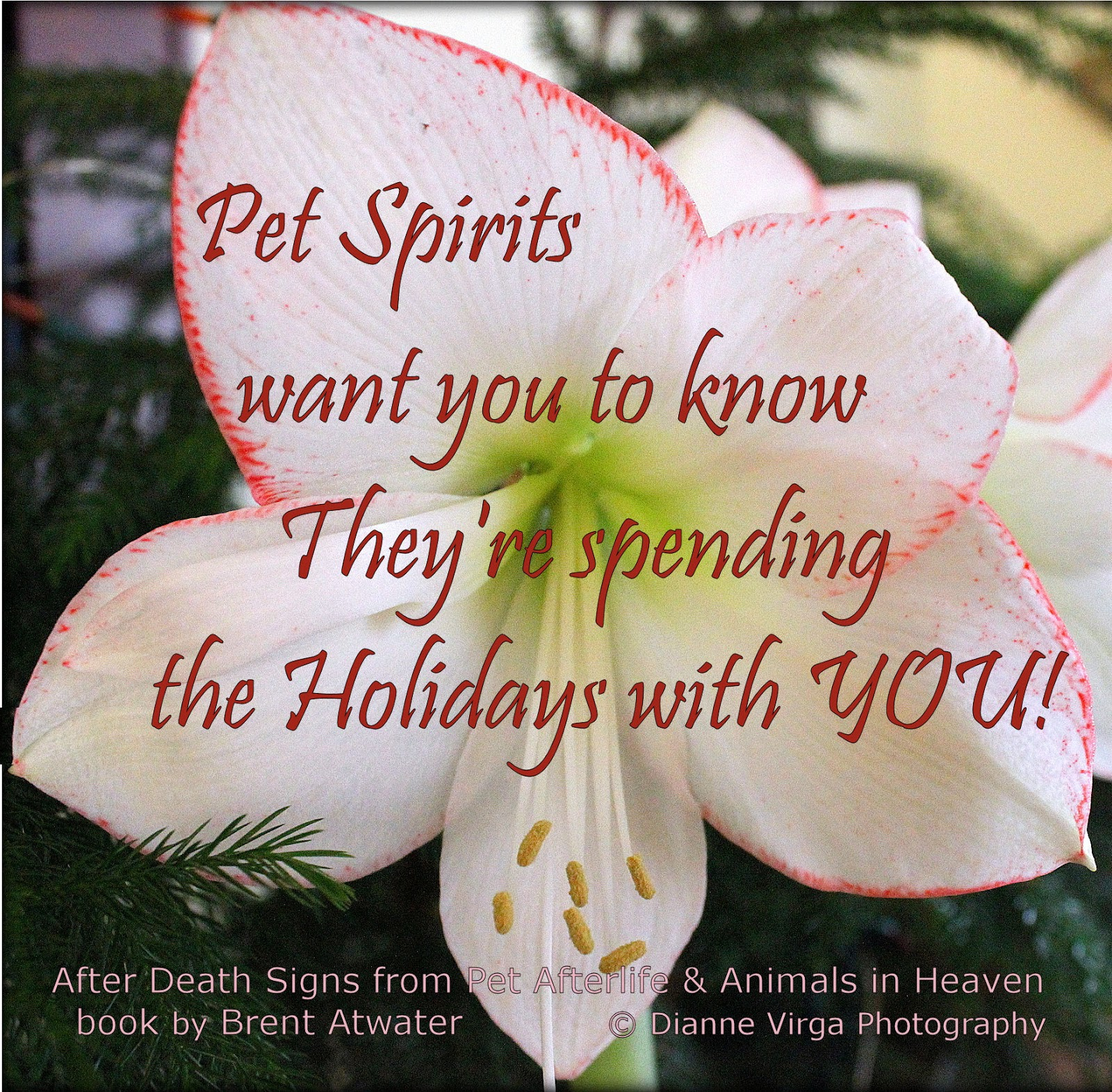 Coping With Death Quotes Healing Loss L Cope With Death L Grief Recovery L Afterlife L Live