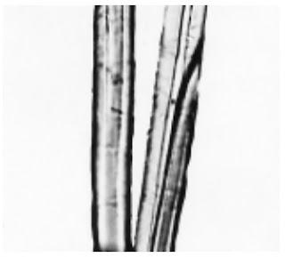 Longitudinal-View-500X-Kenaf-fibre