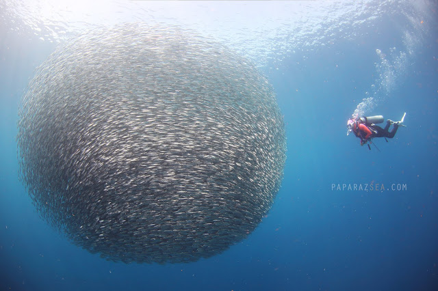 Scuba diving, underwater photography, dive philippines, Scuba diving philippines, underwater pictures, wide angle underwater photography, moalboal, dive moalboal, dive 2019