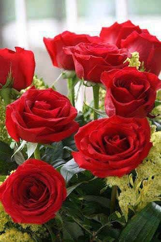 sweet sweet red rose image