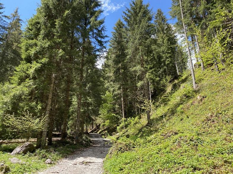 Il sentiero per il rifugio Alpe Corte