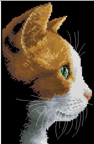 kot krzyzykami ze worem