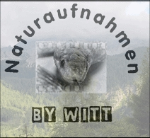 https://www.naturaufnahmen-witt.de/