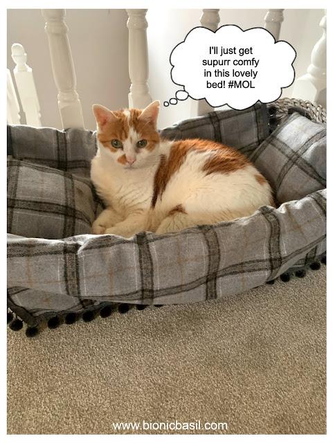 Feline Fiction on Fridays #124 ©BionicBasil®  Amber Waiting For Melvyn