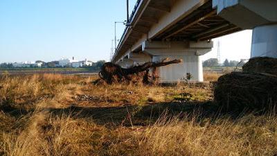 大木が絡みついた橋脚