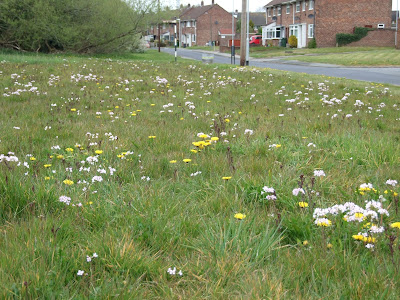 Ladies smock and dandelions in the verge at Lowfields Avenue, Eastham