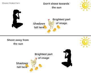 graphic of how to shoot pictures of chicks in sun