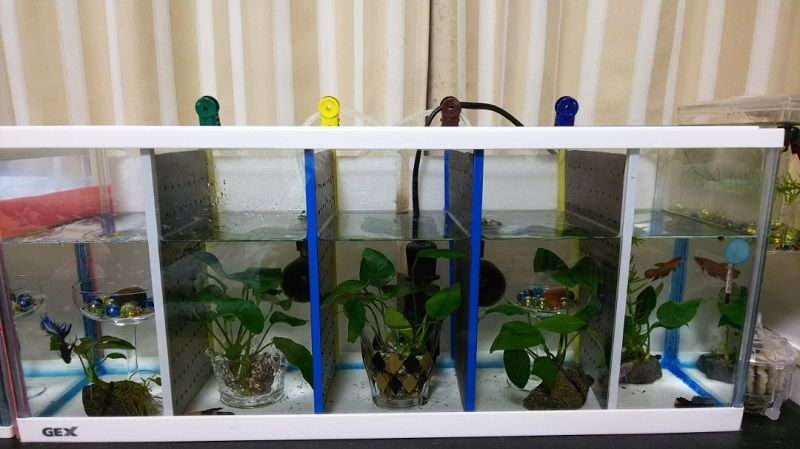 Where to Find Betta Fish Tank Ideas