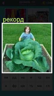 девушка показывает рекордный урожай огромной капусты, лежащей на тележке