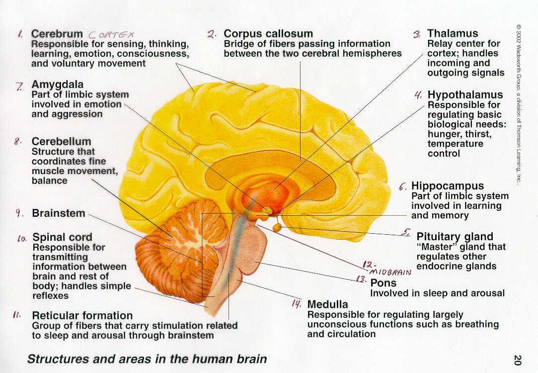 Functions: Brain Jack Image: Brain Function Map