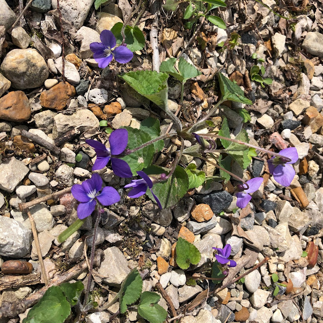 Beautiful violets add some vibrance to Reed-Turner.