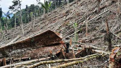 San Martín: confirman deforestación de cuatro hectáreas de bosque protegido en Alto Mayo