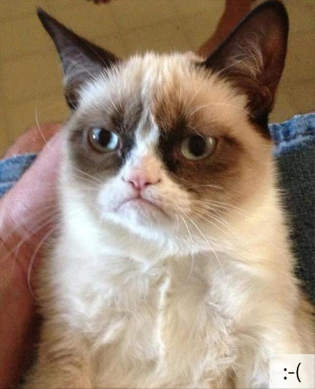23 Funny Cats Emoticons With Live Cat Faces