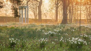 Jardines y prados de bulbos en flor en Morton Hall