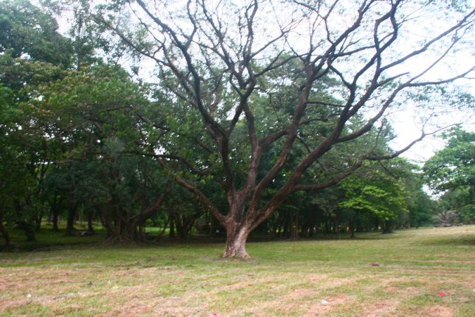 Open field inside UP Diliman