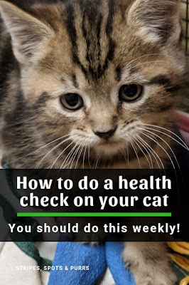 Weekly health check on cats
