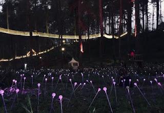 Garden of light orchid forest cikole