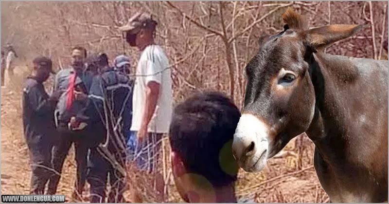 Niña de 11 años murió al ser arrastrada por una Mula en el estado Lara