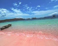 tempat-wisata-pantai-pasir-pink-Flores-yang-unik-dan-indah