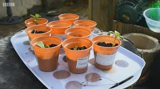 Cally  free plants
