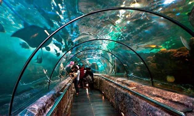 Destinasi Liburan Keluarga, Ini Harga Tiket SEA Aquarium Singapore