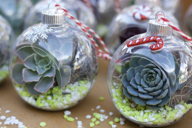 DIY, Succulents, Christmas, crafts, decor, seasonal, holiday crafts, holidays, ornament, terrarium