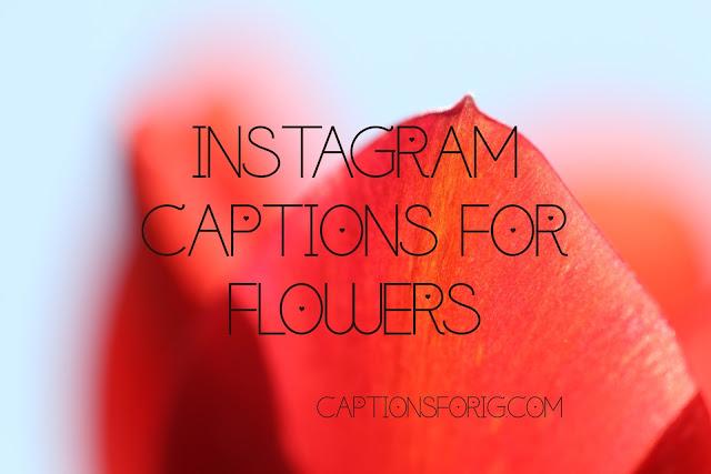 captions-about-flower