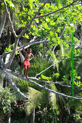 Kid standing on a tree branch, Loboc River, Bohol, Philippines