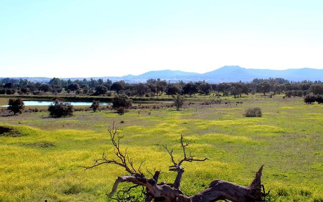Pastizales y lagunas en el Parque Periurbano de Conservación y Ocio Moheda Alta