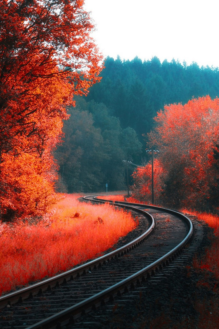 Orange autumn railway track wallpaper