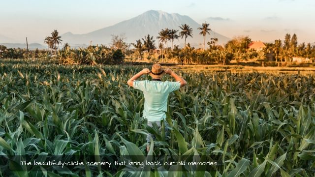 Bali has everything from mountain view down to beaches