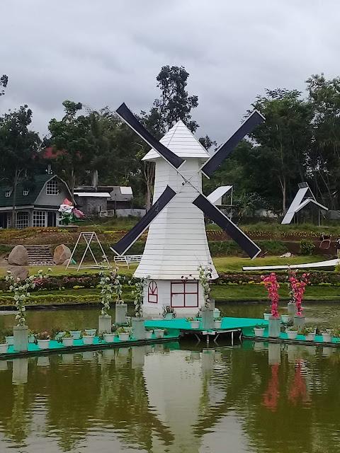 Foto-Foto di Taman Bunga Alamanda Sleman Yogyakarta